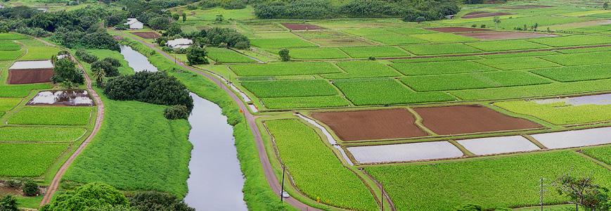 Договор Купли Продажи Земельных Долей Сельхозназначения